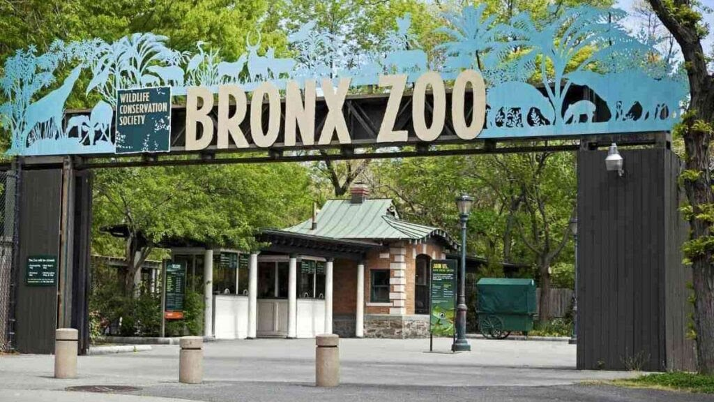 Best zoo in the world, Bronx Zoo, USA