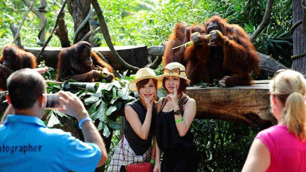 Best zoo in the world, Singapore Zoo