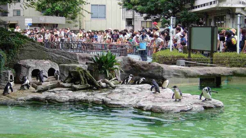 Largest zoo in the world, Ueno Zoo, Tokyo, Japan